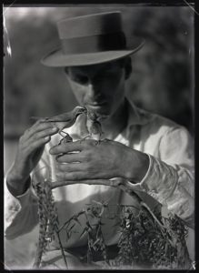 Photograph of William L. Finley holding desert sparrows (1910)
